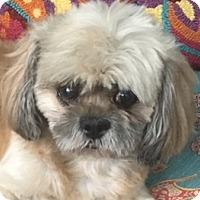 Adopt A Pet :: Tuqui - Miami, FL