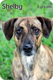Hound (Unknown Type) Mix Dog for adoption in Gulfport, Mississippi - Shelby