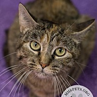 Adopt A Pet :: Sugar - Lake City, MI