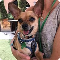 Adopt A Pet :: Lino - San Diego, CA