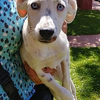 Adopt A Pet :: Dot - Ogden, UT
