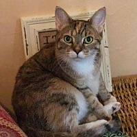 Adopt A Pet :: Leah - Buffalo, NY