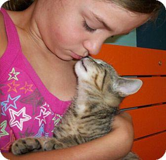 Domestic Shorthair Kitten for adoption in Reston, Virginia - Zippy