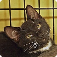 Adopt A Pet :: Pipa - Ocean City, NJ