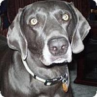 Adopt A Pet :: Maggie - St. Louis, MO