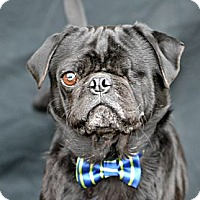 Adopt A Pet :: One-eyed Willie - Plano, TX