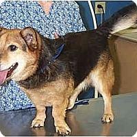 Adopt A Pet :: Freeway - Inola, OK