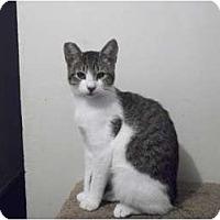 Adopt A Pet :: Bubbles - Modesto, CA