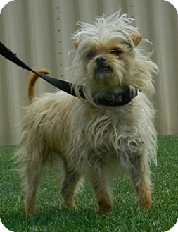 Terrier (Unknown Type, Small) Mix Dog for adoption in Columbus, Nebraska - Ben