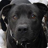 Adopt A Pet :: T-Bone - Chewelah, WA