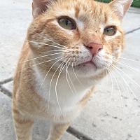 Adopt A Pet :: Tang - Oakdale, CA