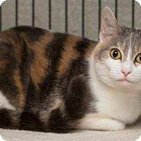Adopt A Pet :: Soap - Lombard, IL