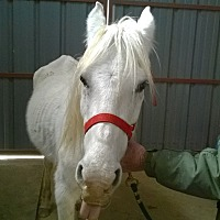 Adopt A Pet :: Temperance - Hitchcock, TX