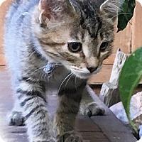 Adopt A Pet :: MandML - North Highlands, CA