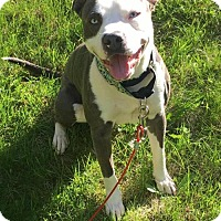 Adopt A Pet :: Eros - THREE RIVERS, MA