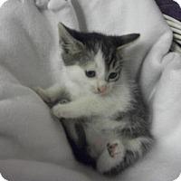 Adopt A Pet :: Felix - Gulfport, MS