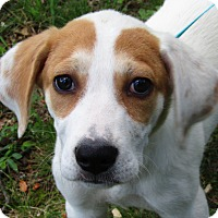 Adopt A Pet :: Jinx - Harrisonburg, VA