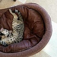 Adopt A Pet :: Jingles L. - Landenberg, PA
