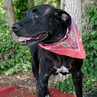 Adopt A Pet :: SOLEIL - Albany, NY