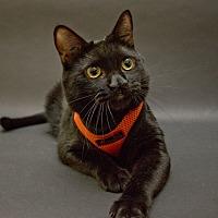 Adopt A Pet :: Cliffy - Pasadena, CA