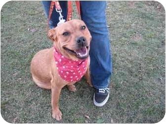 Rottweiler/Retriever (Unknown Type) Mix Dog for adoption in Bellflower, California - Daphne