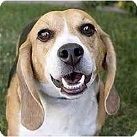 Adopt A Pet :: Rafaelle - Phoenix, AZ
