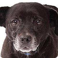 Adopt A Pet :: Lulu - Milan, NY