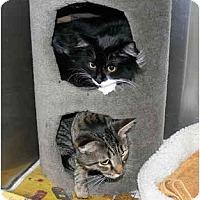 Adopt A Pet :: Jeri - Greenville, SC