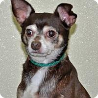 Adopt A Pet :: Guiness - Port Washington, NY