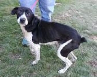 Coonhound (Unknown Type) Mix Dog for adoption in Prestonsburg, Kentucky - papaw