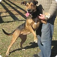 Adopt A Pet :: Serena - Albany, NY