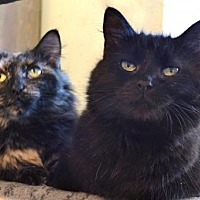Adopt A Pet :: Basil and Curry - Johnson City, TN