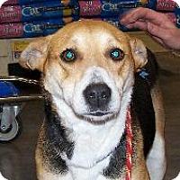 Adopt A Pet :: Candy - Lafayette, LA