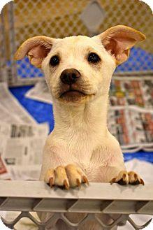 Terrier (Unknown Type, Medium) Mix Dog for adoption in Von Ormy, Texas - Reba