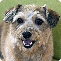 Adopt A Pet :: Rudy - La Costa, CA