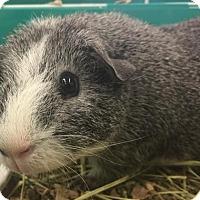 Adopt A Pet :: Date - Vancouver, WA