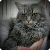 Adopt A Pet :: Mademoiselle - Trevose, PA