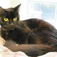 Adopt A Pet :: A1792298 - Bonita, CA