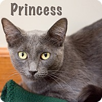 Adopt A Pet :: Princess - Fountain Hills, AZ