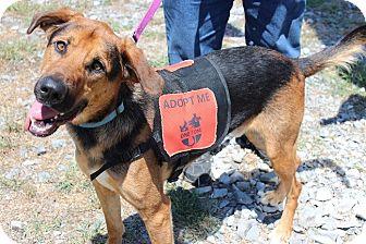 German Shepherd Dog Mix Dog for adoption in Claremore, Oklahoma - Ceasar