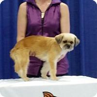 Adopt A Pet :: Benny - Las Vegas, NV