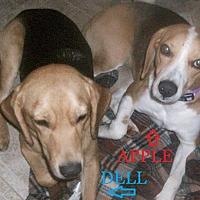 Adopt A Pet :: DELL & APPLE - Ventnor City, NJ