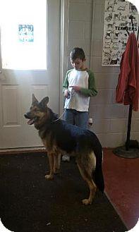 German Shepherd Dog Dog for adoption in Florence, Indiana - Jericho