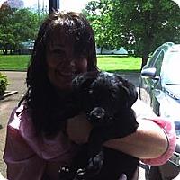 Adopt A Pet :: Scarlet Archer - Southampton, PA