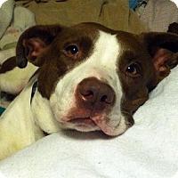 Adopt A Pet :: Miranda - Lacon, IL