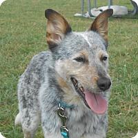 Adopt A Pet :: Spring - Lockhart, TX