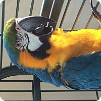 Adopt A Pet :: Harley - Punta Gorda, FL