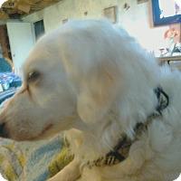 Adopt A Pet :: Dixie - Carey, OH