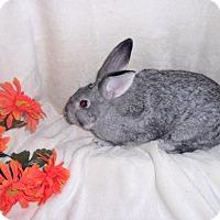 Adopt A Pet :: Mitzi - Maple Shade, NJ