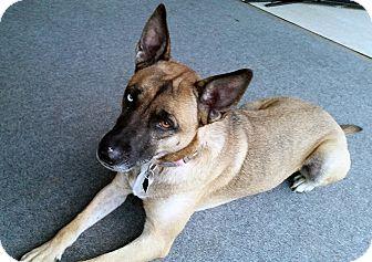 Siberian Husky Mix Dog for adoption in Boyertown, Pennsylvania - Maddie